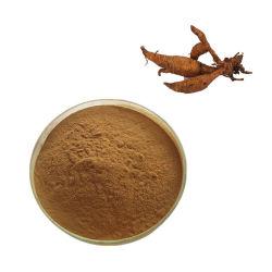 Pueraria Mirifica Root/Kudzu Root/Pueraria Lobata Extract 10: 1 20: 1 Powder