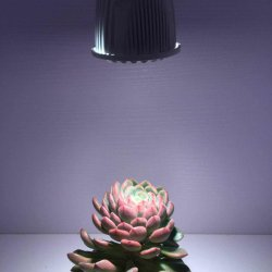 5W LED Grow Light for Small Potted Plants and Succulents
