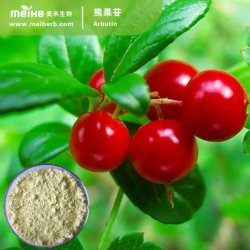 Natural 99% Bearberry Extract Beta Arbutin, Alpha Arbutin