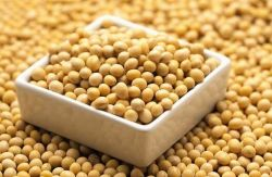 Wholesale Organic Soybean, Wholesale Organic Soybean