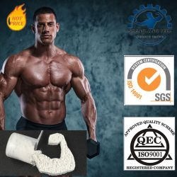USP Amino Acid Creatine Monohydrate Powder for Sports Nutrition CAS: 6020-87-7