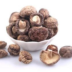 China Edible Fungus, Edible Fungus Manufacturers, Suppliers, Price