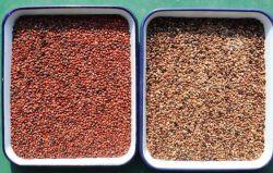 Jujube Kernel Lotus Seed Ophiopogon Astragalus Slurry Color Separator Seed Color Selector
