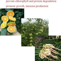 Plant Growth Regulator Hormones DCPTA 98%TC Powder Price in Agriculture