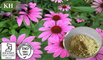 100% Natural Echinacea Purpurea Extract Cichoric Acid 1%-4% HPLC