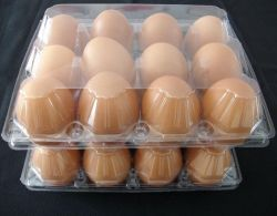 Plastic Biodegrade Eggs Crate 12 Cells Holder Tray Transparent Clamshell Eggs Container Box
