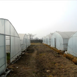 PE Multi-Span Glass Plastic Film Hydroponic Greenhouse for Vegetable Growing