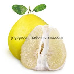 Wholesale Super Quality Fresh Pomelo for Exporting