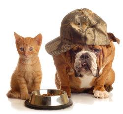 Dog/Cat Food Production Process