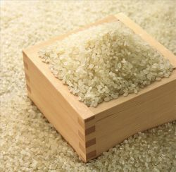 China Short Broken Rice, Short Broken Rice Manufacturers, Suppliers
