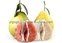 New Crop Fresh Honey Pomelo Supplier From China