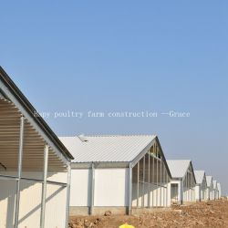 Steel Structure Poultry Farm Shed with Production Equipment
