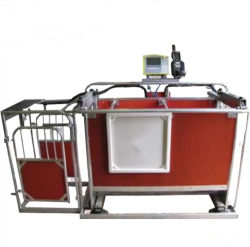 Sheep Equipment Automatical 3-Way Sheep Goat Draft Scale Factory Price