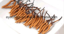 10 Years Experience in Plant Extract The Best Service and The Best Price to Develop Overseas Markets. Welcome New Friends Win-Win Cooperation. Cordyceps