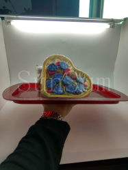New Product and New Design for Food Grade Salver and Fruit Tray