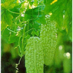 Supply Bitter Melon Extract for Lower Blood Sugar Fast