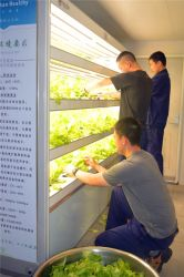 China Grow Plants, Grow Plants Manufacturers, Suppliers