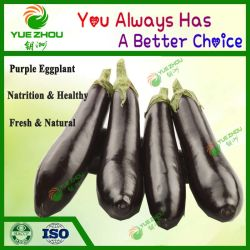 China Fresh Vegetable, Fresh Vegetable Manufacturers