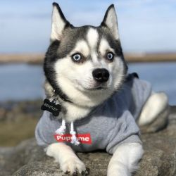 High Quality New Pet Dog Sport Style Cotton Warm Clothes