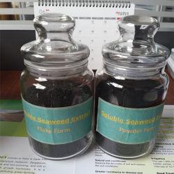 Powder Shape Organic Fertilizer Seaweed Extract