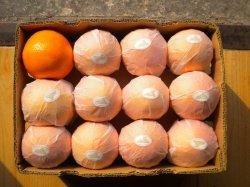 Fruit Orange Pulpy Juice of 250ml Drink Juice