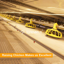 Reasonable and cheap price automatic bird-havesting broiler chicks rate