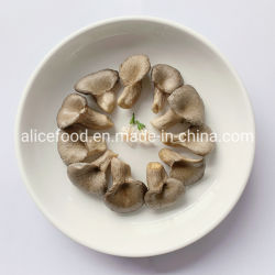 China Oyster Mushroom, Oyster Mushroom Manufacturers