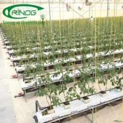 大きい野菜農場のための農場によって使用されるコショウのhydroponicsシステム