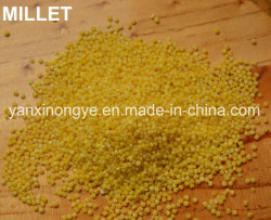 Très nourrissante de la nutrition Coque jaune Millet Millet de sélénium organique