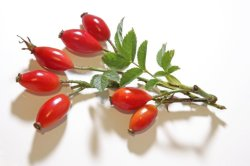 Alimentação Rosehip orgânicos essenciais óleo Óleo de semente de Rosa Mosqueta Óleo do Transportador