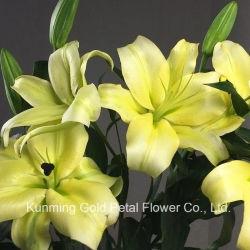 Bester Geschenk-und Dekoration-frische Schnitt-Blumen-Lilien-gelber König Lily