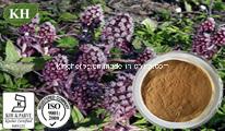 Petasin Butterbur naturel extrait -