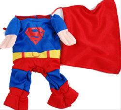 Superman lindo perro desgaste