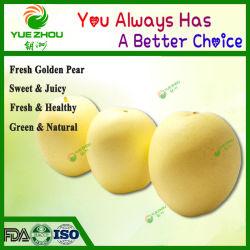 Efeito de pesticidas chinês Golden Pear pêra doce com preço barato