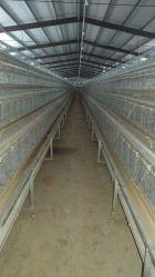 Fertigbaumaterial-galvanisierter Stahlkonstruktion-Viehbestand bewirtschaftet Huhn-Haus