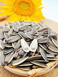 Meilleur prix nord-ouest de l'origine de l'écrou de pin /arachides/noix/ Graines décortiquées