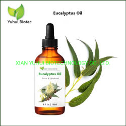 Beste therapeutische kwaliteit essentiële olie 100% Pure Eucalyptus olie