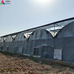 Serra del film di materia plastica della portata di Muti di agricoltura per i fiori/pomodoro