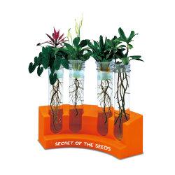 Ciências da Natureza bricolage Kit de produção vegetal para crianças