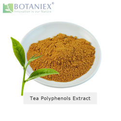ベストセラーの上の草の中国白の茶ポリフェノールのエキス20%-80%