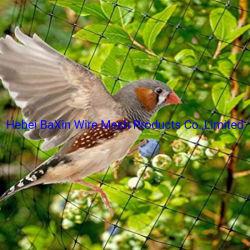 サポートをカスタマイズ農業標準メッシュ防止鳥ネットプラント保護ネットティング