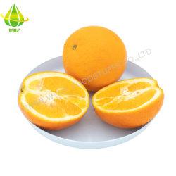 新しく、おいしい40p/48p/56p/64p/72p Gannanのオレンジ