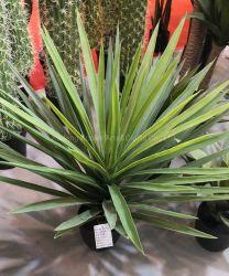 Whoesale PE Agavaceae домашних растений декоративных искусственных растений в горе Якка для продажи