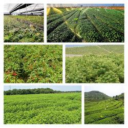 農業のための高品質の殺虫剤のロテノン40%