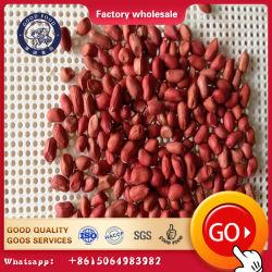 Fabricado en China Nueva Cosecha buena calidad de la piel roja Raw de la tuerca de tierra de maní descascarado de cacahuete Piel roja