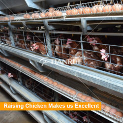 デザイン現代自動養鶏場の層または雌鶏または卵の鶏のための装置によって電流を通される鶏電池ケージ
