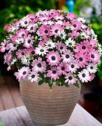 المصنع مباشرة بيع الورد الحيوي القابل للتحلل من الورد الورد الورد الورد الورد 12 بوصة الحجر جدير بالبلاستيك وعاء مصنع وعاء النباتات وعاء حديقة