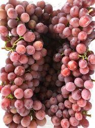 Uva globale rossa sugosa dolce fresca