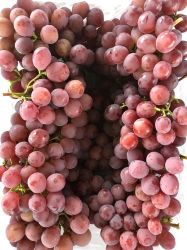 Frais de raisin rouge Sweet juteuse Global