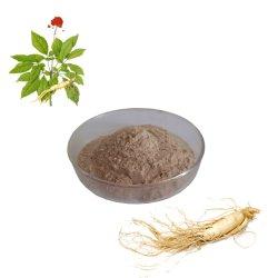 Ernährungsergänzungs-Puder Ginsenosides Ginseng-Wurzel-Auszug